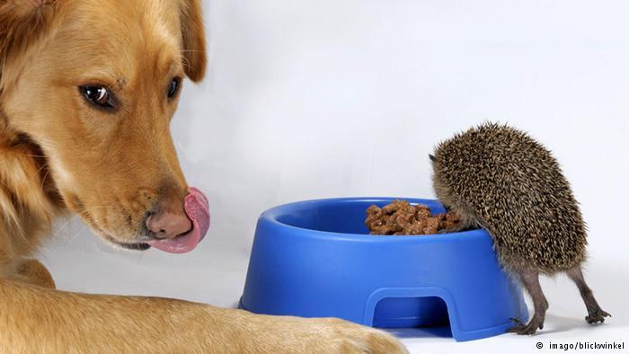غذا دادن به حیوانات