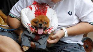 سگی در آستانه هالووین ۲۰۱۳ در آمریکا